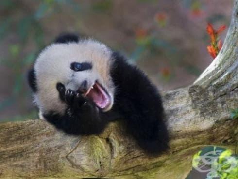 Най-смешните gif-ове с животни, които сте виждали, на които ще се смеете с глас и сълзи (част 2) - изображение