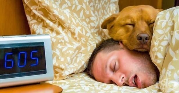 Учени: Полезно е да спите с домашния си любимец - изображение