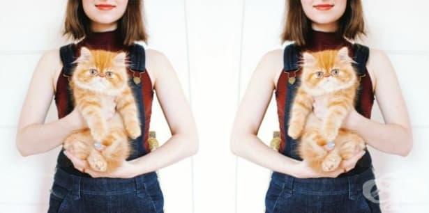 Дали собствениците на котки са по-склонни към изневяра в отношенията си? - изображение