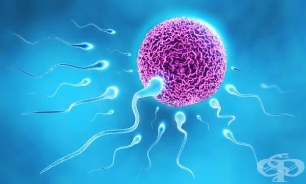 14 интересни факта за сперматозоидите, които ще взривят представите ви - изображение
