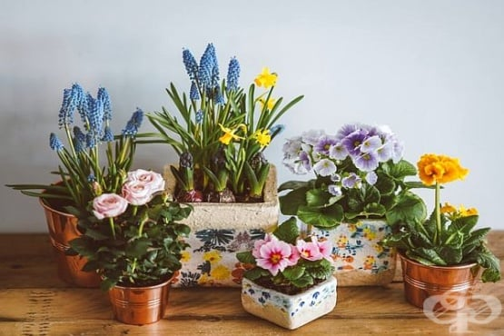 Каква енергия ни носят цветята у дома? - изображение