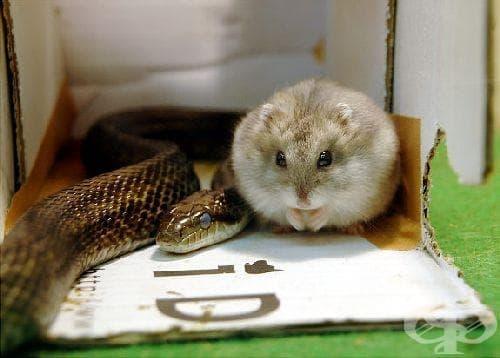 Най-необичайните приятелства в животинския свят - изображение