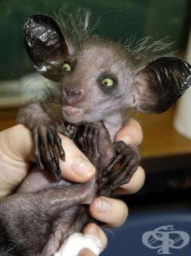 Странни животни, за чието съществуване дори не подозирате - изображение