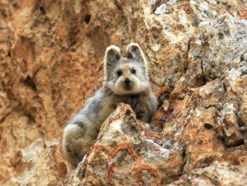 11 невероятни животни, които вероятно не знаете, че съществуват - изображение