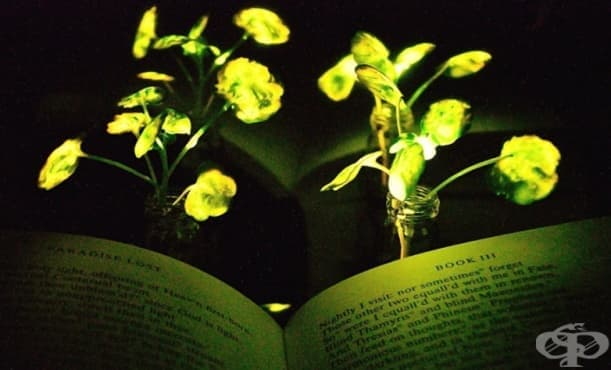 Масачузетският технологичен институт създаде растения, които светят като лампи - изображение
