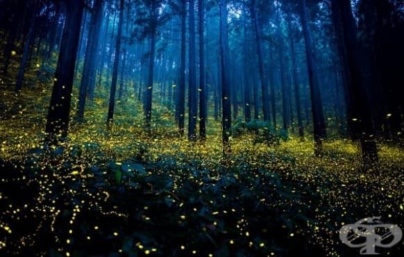 Сюрреалистични снимки на светулки от Япония  - изображение
