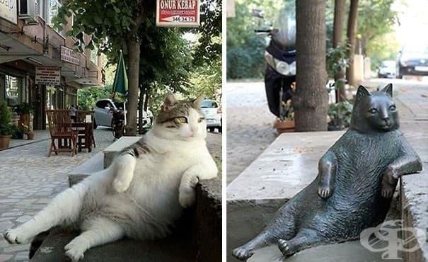 Най-известният котарак в Истанбул беше награден със собствена статуя на любимо му място - изображение