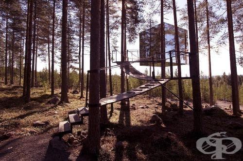 В Швеция има хотелски комплекс сред многовековна гора с къщички по дърветата като от приказките - изображение