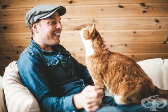 Как да тренирате котката си да прави 5 невероятни неща - изображение