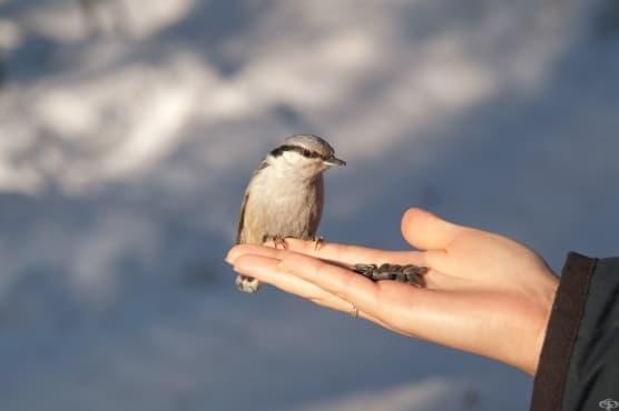 Трите съвета на птичката – притча - изображение