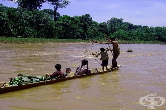 Защо хората от племето цимане имат здрави сърца и по-рядко страдат от мозъчна атрофия  - изображение