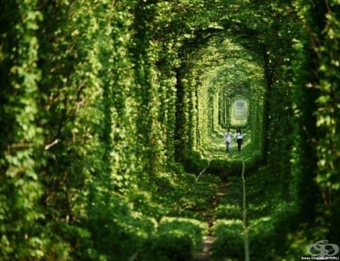 Тунелът на любовта, който сбъдва желания - изображение