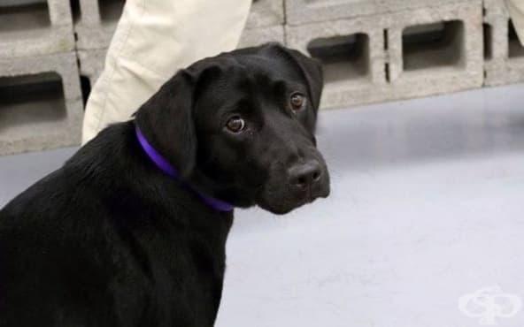 Тъжното куче Лулу - агентът на ЦРУ, който не надушва експлозиви - изображение