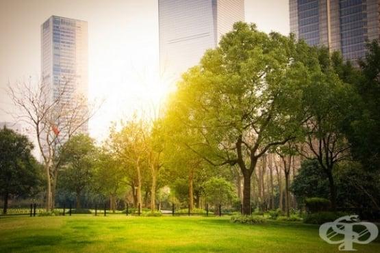 Учени изчисляват какъв е приносът на дърветата за намаляване на горещините в големите градове - изображение