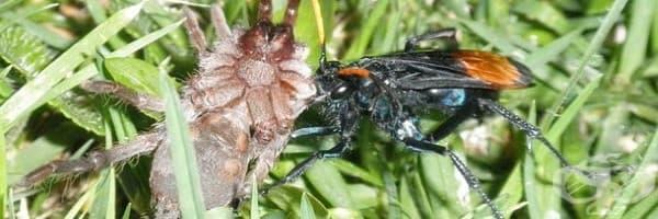 6 ужасяващи насекоми, на които не им пука за правилата на Майката природа – II част - изображение
