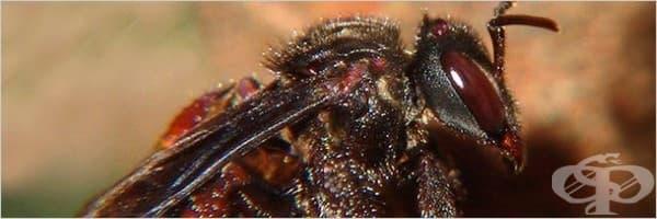 6 ужасяващи насекоми, на които не им пука за правилата на Майката природа – III част - изображение