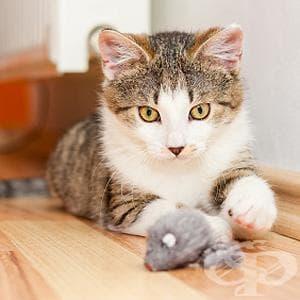 Как да превърнете агресивната котка в дружелюбен домашен любимец? - изображение