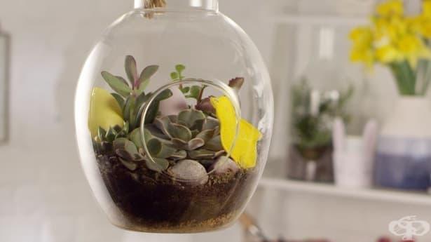 Висящ великденски терариум – миниатюрният зелен рай във вашия дом - изображение