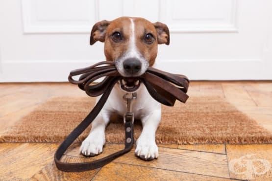 Вредни неща, които правите с кучето си, без да го осъзнавате - изображение