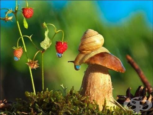Вижте миниатюрния свят на охлювите и насекомите отблизо както никога преди през обектива на Вячеслав Мищенко - изображение