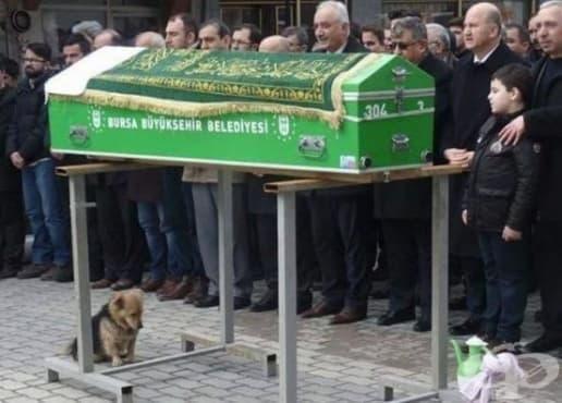 Куче с разбито сърце посещава гроба на стопанина си всеки ден - изображение