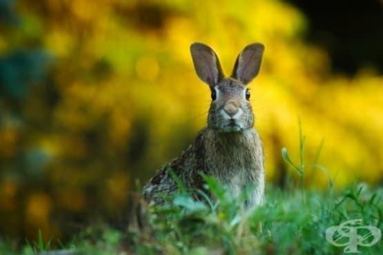 Най-добрите зайци от филми - изображение