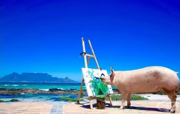Запознайте се с Пигасо – прасето художник, което създава шедьоври - изображение