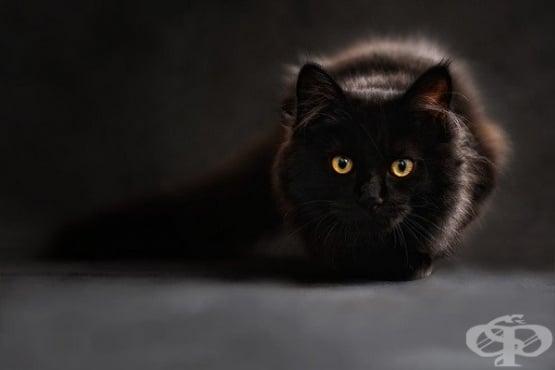 Защо котката е агресивна и как да се справите с котешката агресия - изображение