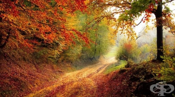 Защо листата на дърветата променят цвета си – науката зад есента - изображение