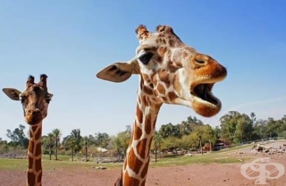 Странни факти за животните, които ще ви натъжат - част 1 - изображение