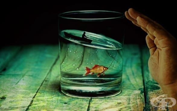 Риби или котка? Как да изберете домашен любимец с правилния размер за вашия дом  - изображение