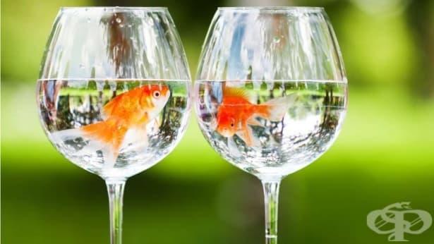 Златната рибка може да произвежда свой собствен алкохол, а сега знаем как точно - изображение