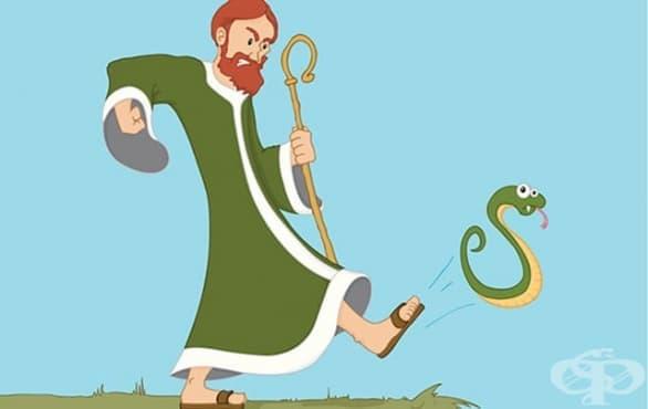 Защо в Ирландия няма змии: наистина ли Св. Патрик ги изгонва в морето - изображение