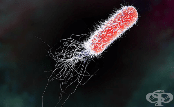 Коли бактерии (Escherichia) - изображение