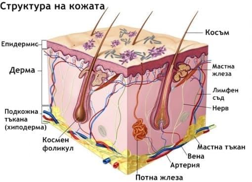Инфекции на кожата - изображение