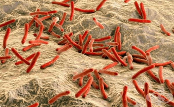 Причинител на лепра (проказа) (Mycobacterium leprae) - изображение