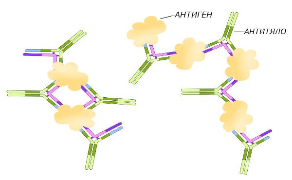 Антиген-антитяло реакции - изображение
