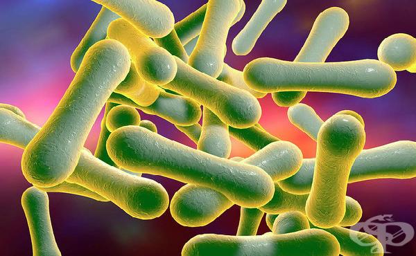 Коринебактерии (Corynebacterium) - изображение