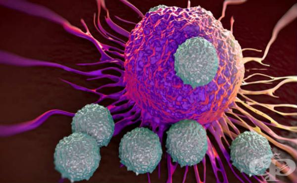Придобит имунитет - видове и форми - изображение