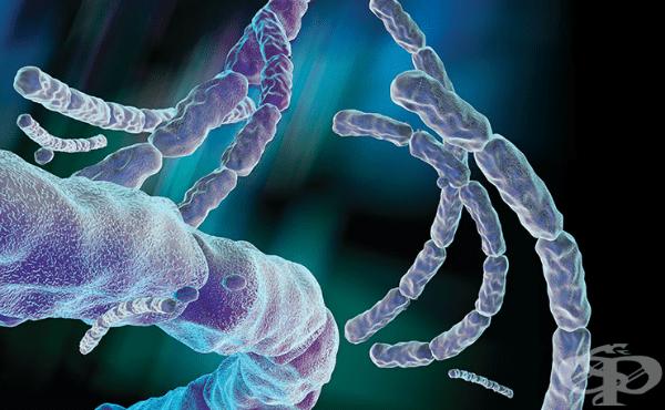 Антраксен бацил (Bacillus anthracis) - изображение