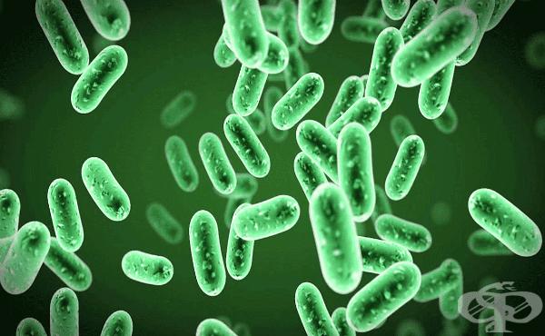 Наследственост и изменчивост при бактериите - изображение