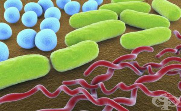 Взаимодействие между микроорганизмите и макроорганизма - изображение