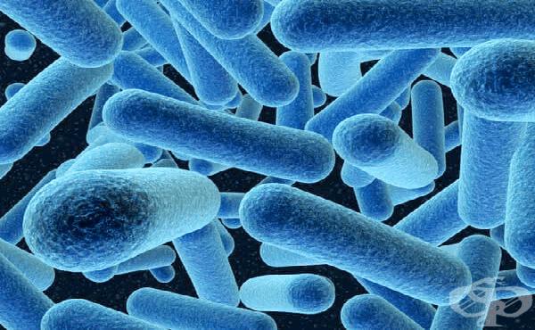 Анаеробни неспорообразуващи бактерии - изображение