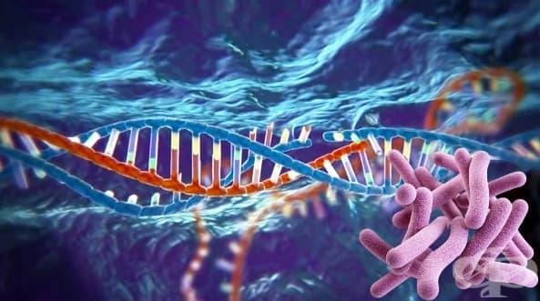 Бактериална генетика - изображение