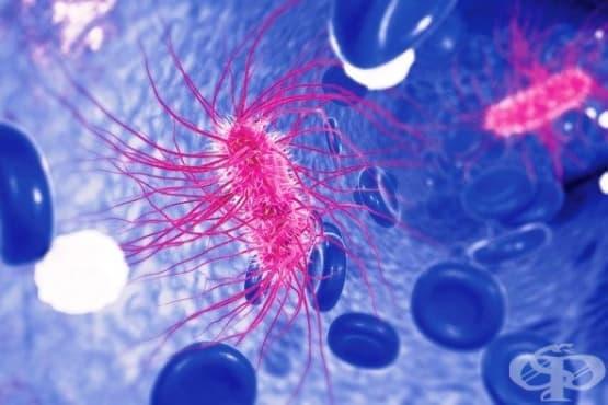 Бактериална капсула и гликокаликс - изображение