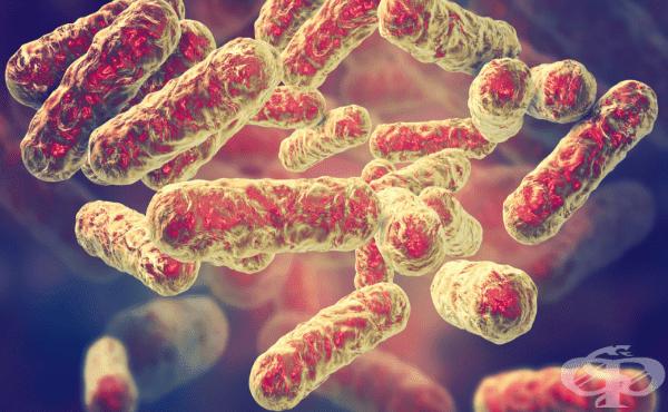 Бартонела (Bartonella) - изображение