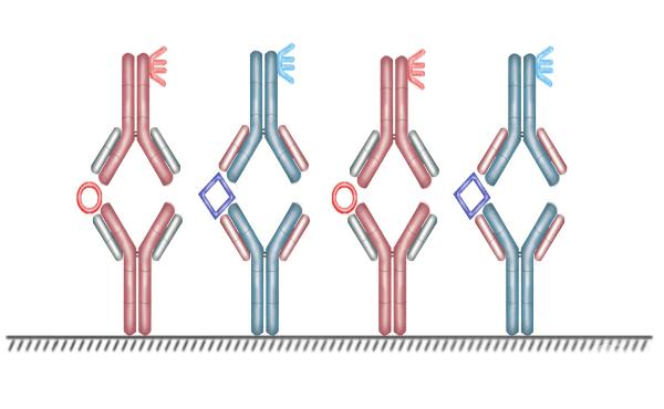 Реакции с белязани антитела - изображение