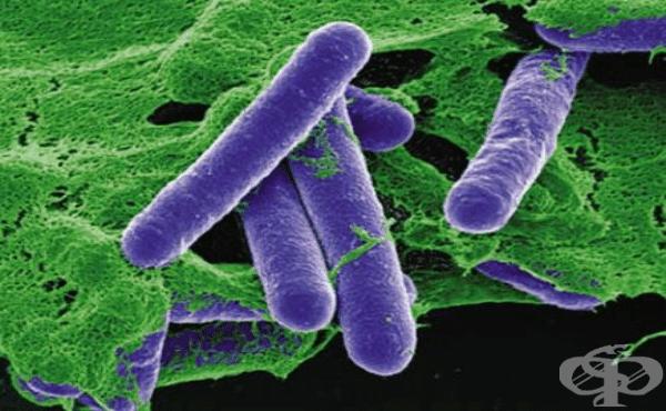 Причинител на ботулизма (Clostridium botulinum) - изображение