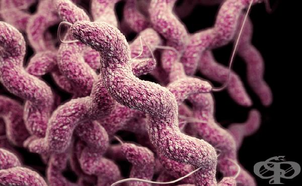 Кампилобактер (Campylobacter) - изображение