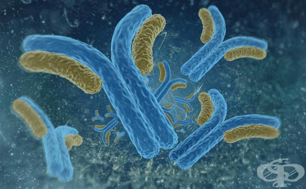 Антитела - структура и функция - изображение
